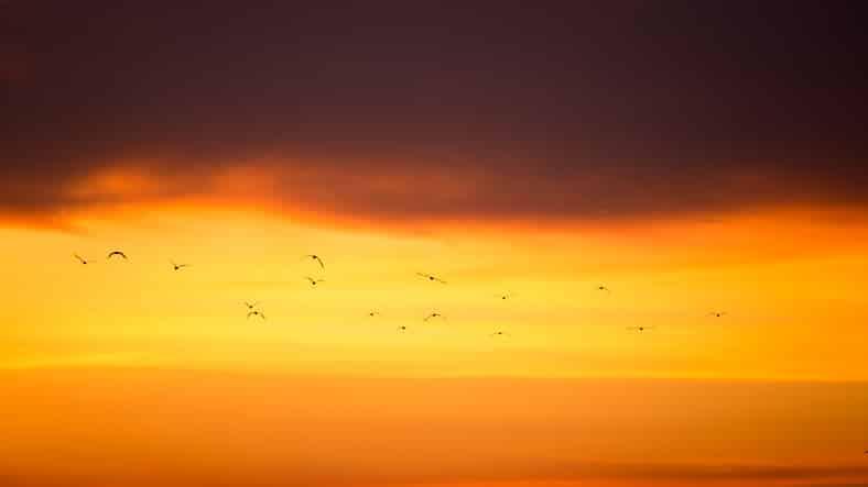 Emigrated seagull flying in sunrise at Bangpu, Thailand